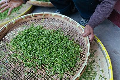 Tea Sourcing